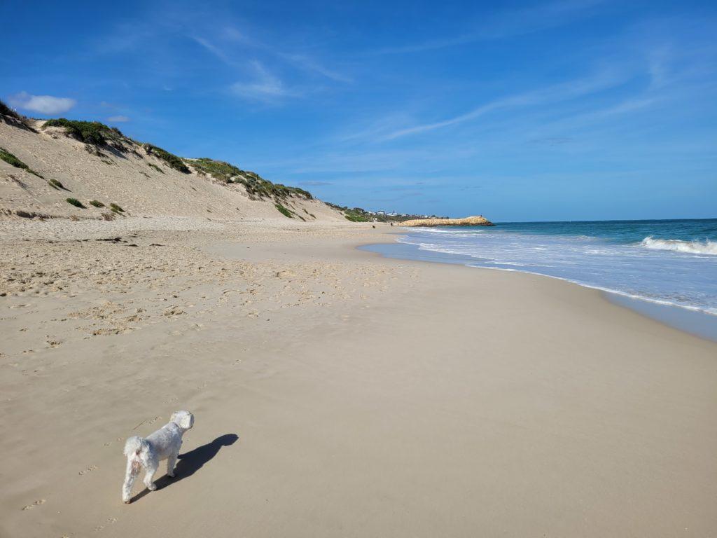 Enjoying a walk along Quinns Dog beach